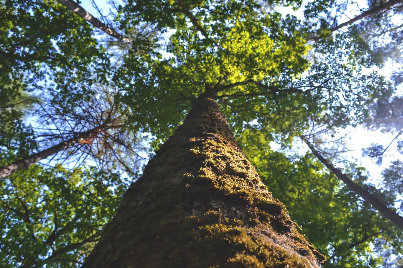 c29bf42bffbde7 Warum Biyoga auf GOTS setzt – Nachhaltigkeit für Natur und Mensch ...